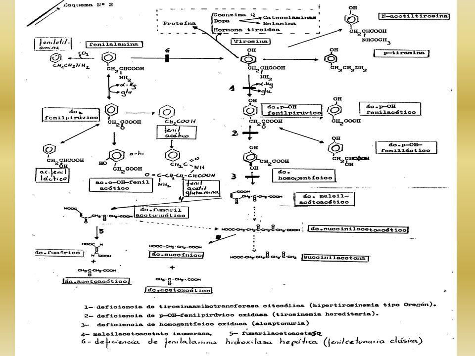 EL PIGMENTO DE LA PIEL HUMANA TIENE 2 COMPONENTES: 1- COLOR CONSTITUTIVO CANTIDAD DE PIGMENTO GENERADO POR UN PROGRAMA GENÉTICO EN AUSENCIA DE LUZ UV INTERVIENEN 3 O 4 PARES DE GENES (BLANCO AL NEGRO) 2- COLOR FACULTATIVO INDUCIBLE POR LA LUZ UV, HORMONAS Y ALGUNAS ENFERMEDADES – ES REVERSIBLE, SIN INFLUENCIA GENÉTICA COLOR DE LA PIEL ORIGEN RACIAL DEL INDIVIDUO TIPOS DE ALBINISMO: A)OCULO- CUTÁNEO 10 FORMAS DESCRIPTAS PIEL- OJOS- CABELLOS B)OCULAR 4 FORMAS DESCRIPTAS – AFECTA SOLAMENTE OJOS