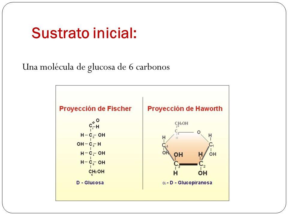 Sustrato inicial: Una molécula de glucosa de 6 carbonos