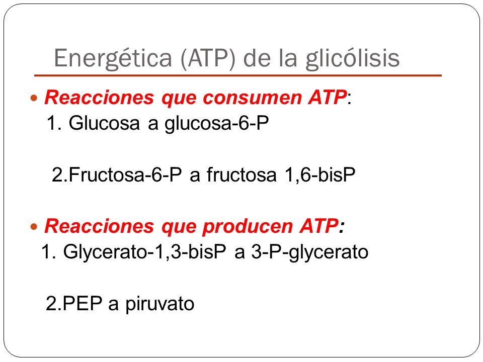 Energética (ATP) de la glicólisis Reacciones que consumen ATP: 1. Glucosa a glucosa-6-P 2.Fructosa-6-P a fructosa 1,6-bisP Reacciones que producen ATP