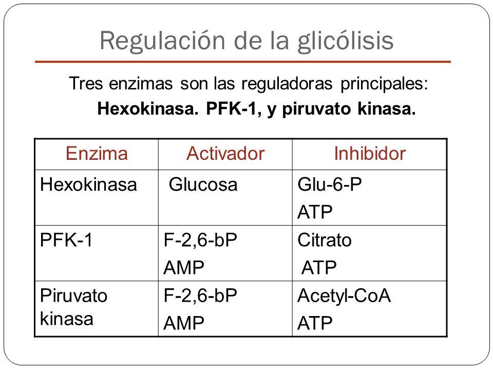 Regulación de la glicólisis Tres enzimas son las reguladoras principales: Hexokinasa. PFK-1, y piruvato kinasa. EnzimaActivadorInhibidor Hexokinasa Gl