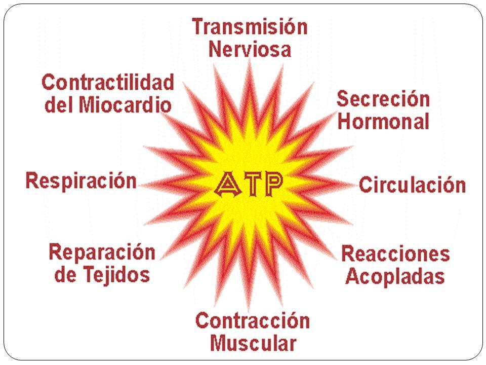 Energética (ATP) de la glicólisis Reacciones que consumen ATP: 1.