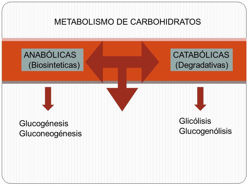 METABOLISMO DE CARBOHIDRATOS ANABÓLICAS (Biosinteticas) CATABÓLICAS (Degradativas) Glucogénesis Gluconeogénesis Glicólisis Glucogenólisis