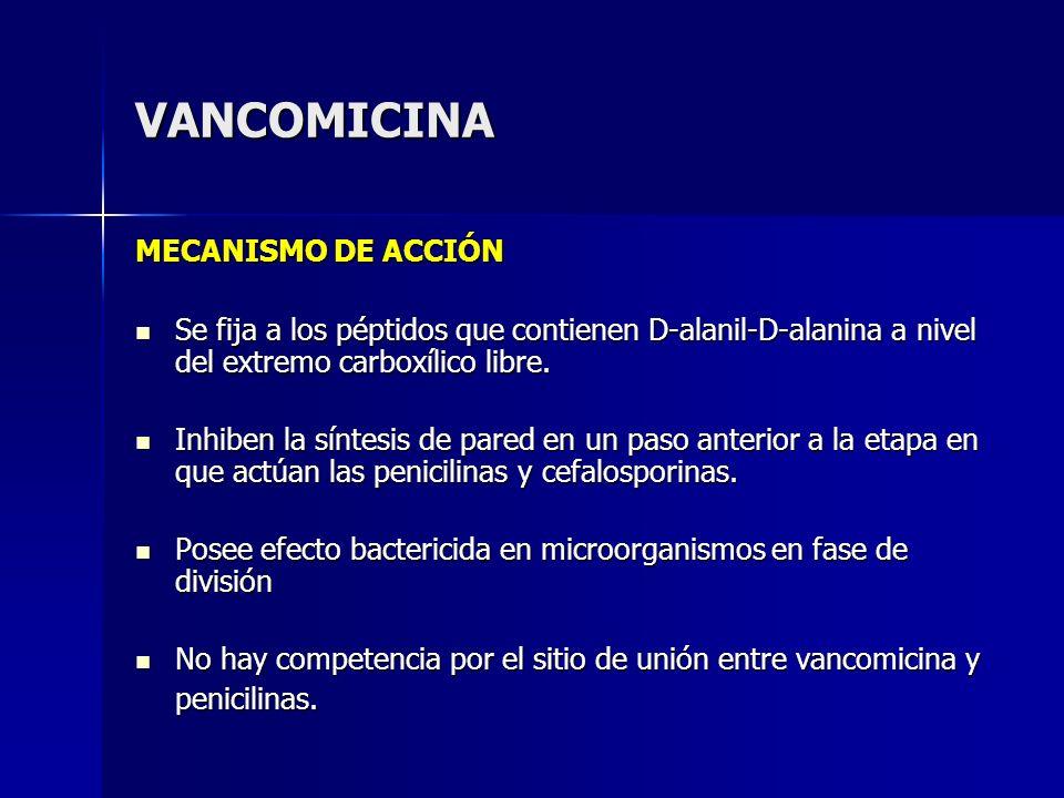 VANCOMICINA MECANISMO DE ACCIÓN Se fija a los péptidos que contienen D-alanil-D-alanina a nivel del extremo carboxílico libre. Se fija a los péptidos