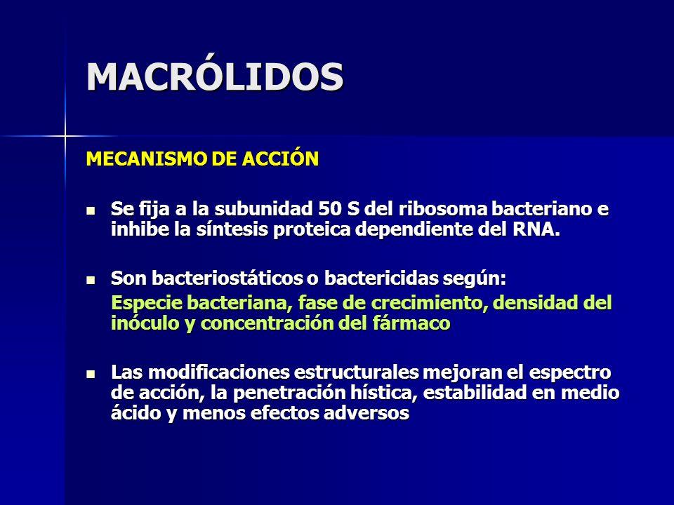 MACRÓLIDOS MECANISMO DE ACCIÓN Se fija a la subunidad 50 S del ribosoma bacteriano e inhibe la síntesis proteica dependiente del RNA. Se fija a la sub