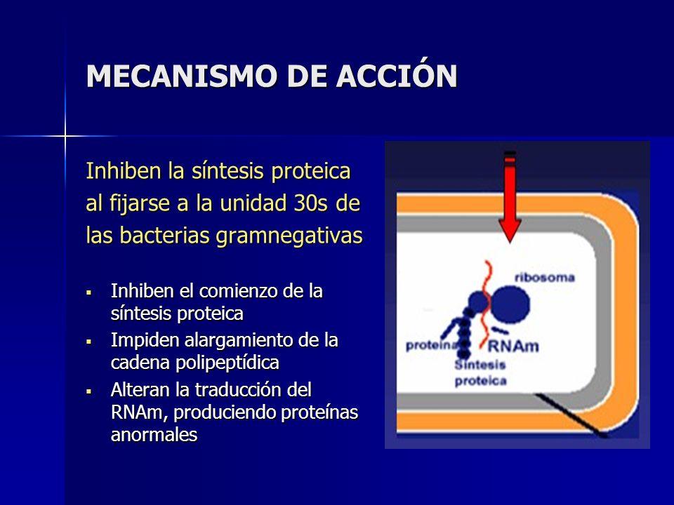 MECANISMO DE ACCIÓN Inhiben la síntesis proteica al fijarse a la unidad 30s de las bacterias gramnegativas Inhiben el comienzo de la síntesis proteica