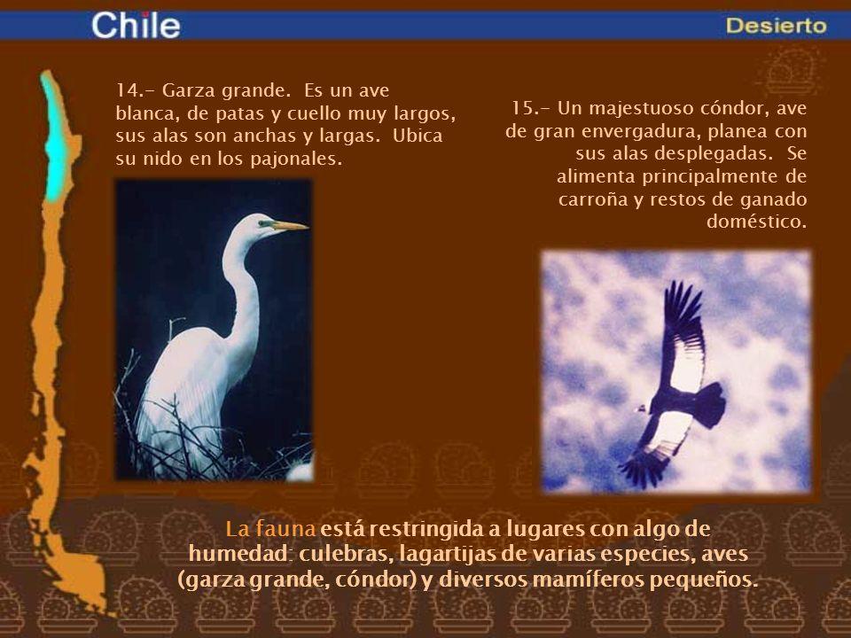 La fauna está restringida a lugares con algo de humedad: culebras, lagartijas de varias especies, aves (garza grande, cóndor) y diversos mamíferos peq