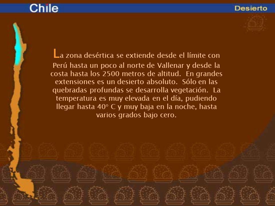L a zona desértica se extiende desde el límite con Perú hasta un poco al norte de Vallenar y desde la costa hasta los 2500 metros de altitud. En grand