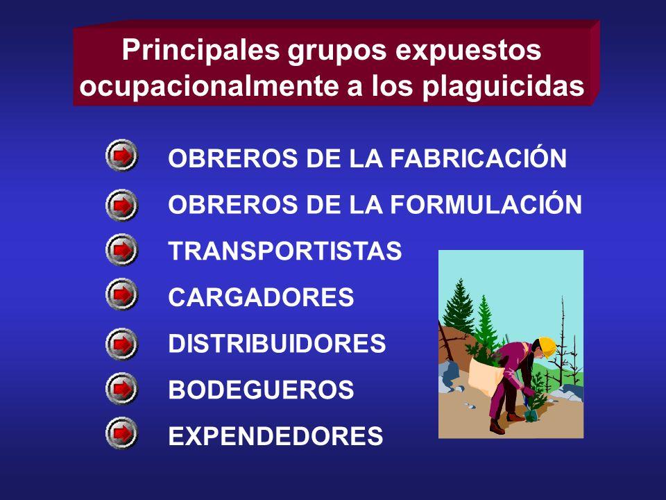 Principales grupos expuestos ocupacionalmente a los plaguicidas OBREROS DE LA FABRICACIÓN OBREROS DE LA FORMULACIÓN TRANSPORTISTAS CARGADORES DISTRIBU