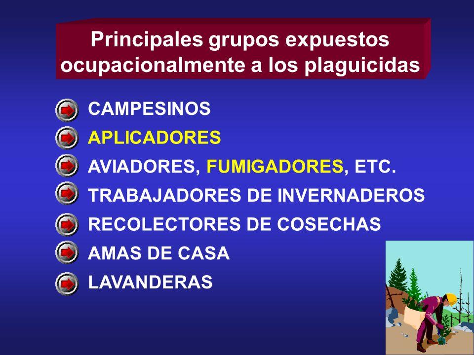 CAMPESINOS APLICADORES AVIADORES, FUMIGADORES, ETC. TRABAJADORES DE INVERNADEROS RECOLECTORES DE COSECHAS AMAS DE CASA LAVANDERAS Principales grupos e