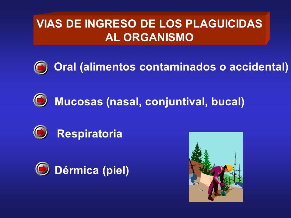 Oral (alimentos contaminados o accidental) Mucosas (nasal, conjuntival, bucal) Respiratoria Dérmica (piel) VIAS DE INGRESO DE LOS PLAGUICIDAS AL ORGAN