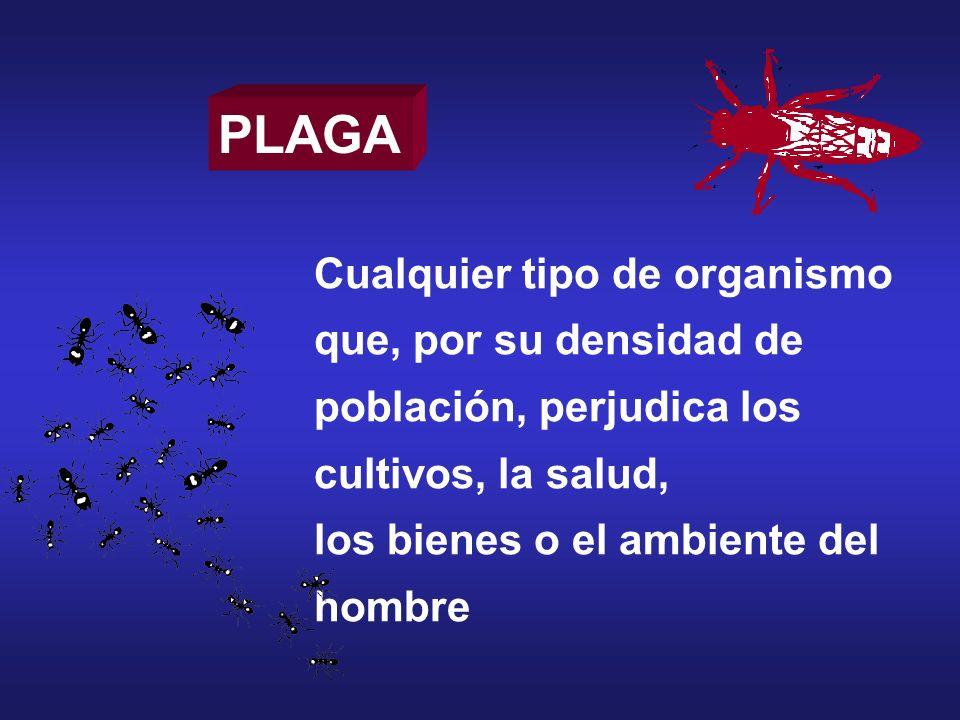 ¿Cómo se produce una plaga.