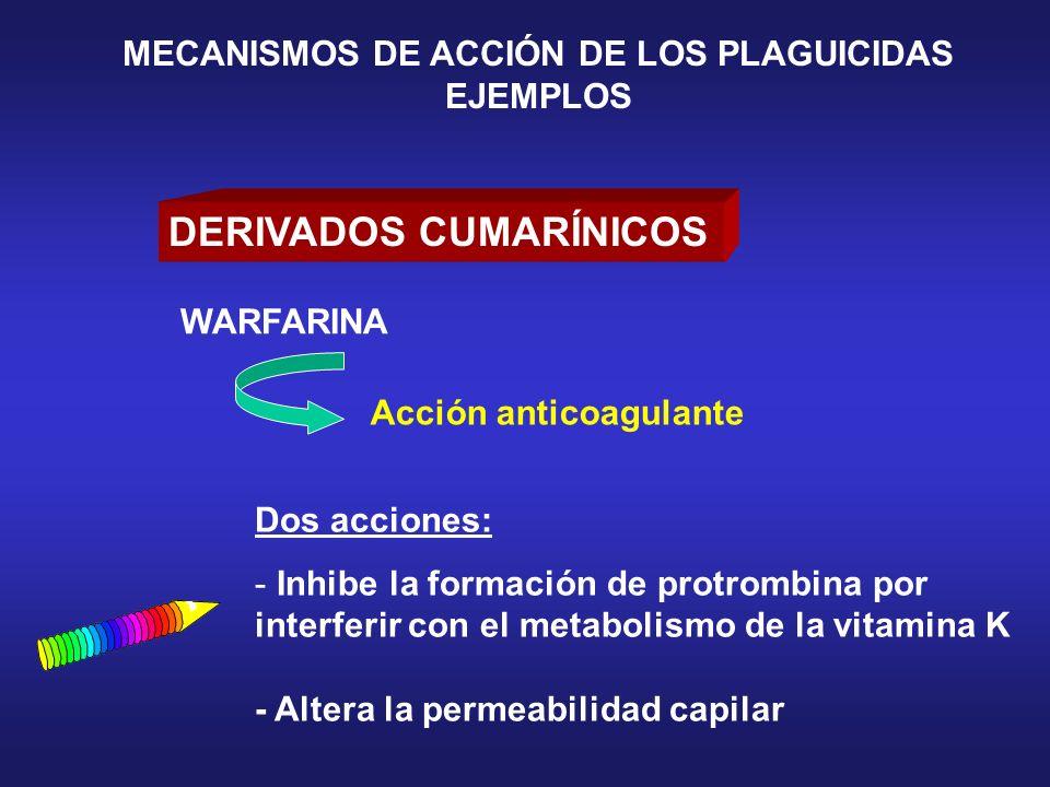 DERIVADOS CUMARÍNICOS Dos acciones: - Inhibe la formación de protrombina por interferir con el metabolismo de la vitamina K - Altera la permeabilidad