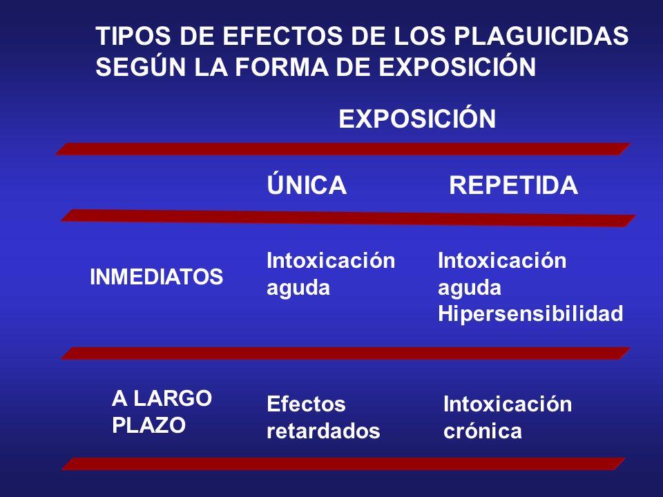 TIPOS DE EFECTOS DE LOS PLAGUICIDAS SEGÚN LA FORMA DE EXPOSICIÓN EXPOSICIÓN ÚNICAREPETIDA INMEDIATOS A LARGO PLAZO Intoxicación aguda Efectos retardad