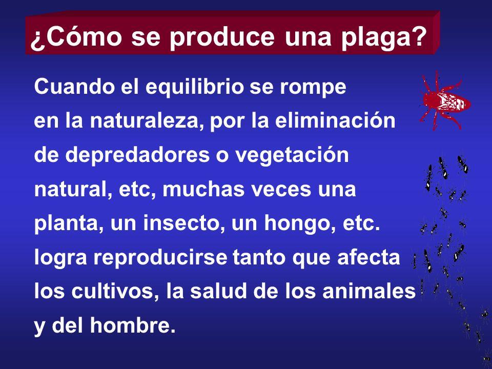 ¿Cómo se produce una plaga? Cuando el equilibrio se rompe en la naturaleza, por la eliminación de depredadores o vegetación natural, etc, muchas veces