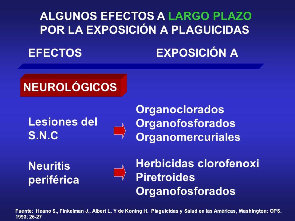 ALGUNOS EFECTOS A LARGO PLAZO POR LA EXPOSICIÓN A PLAGUICIDAS EFECTOSEXPOSICIÓN A NEUROLÓGICOS Organoclorados Organofosforados Organomercuriales Lesio