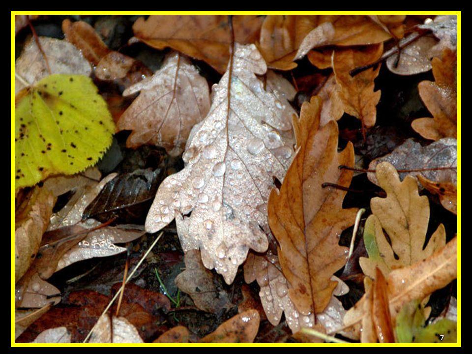 Y el Otoño, cuando el bosque se viste de los colores más increíbles 6