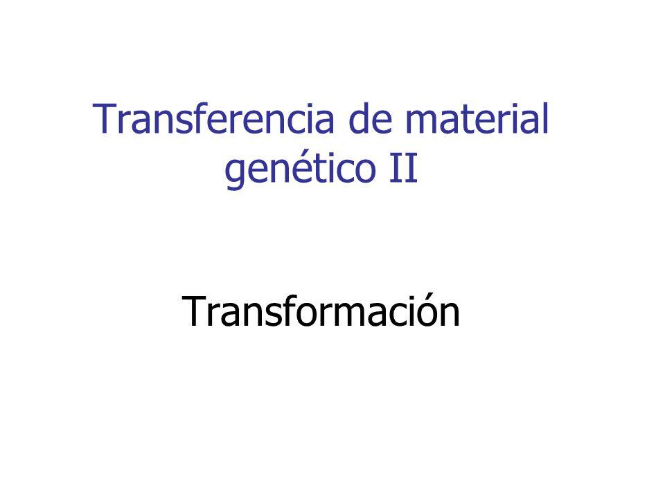 Proceso de transformación bacteriana Células competentes Hielo 45 s 1-5 uL plásmido Resistencia a antibiótico Plásmido Bacteria 30 min hielo Selección Sin AntibioticoCon Antibiotico