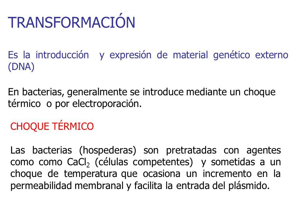 TRANSFORMACIÓN Es la introducción y expresión de material genético externo (DNA) En bacterias, generalmente se introduce mediante un choque térmico o
