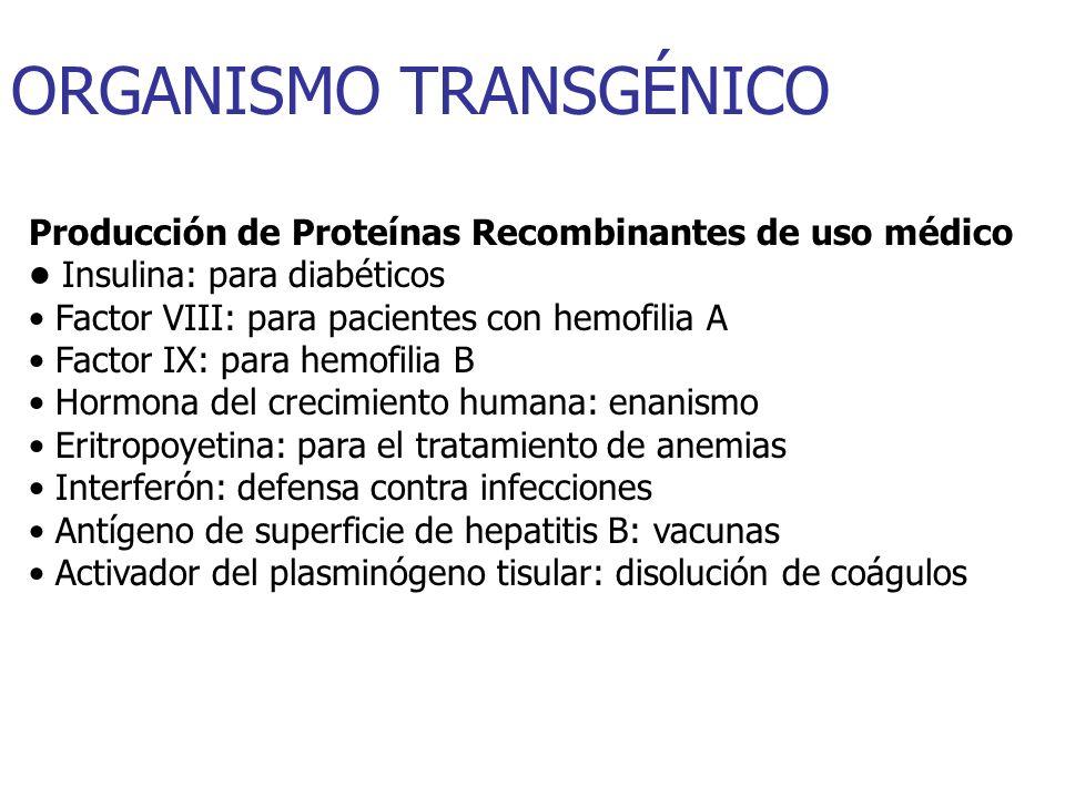 ORGANISMO TRANSGÉNICO Producción de Proteínas Recombinantes de uso médico Insulina: para diabéticos Factor VIII: para pacientes con hemofilia A Factor