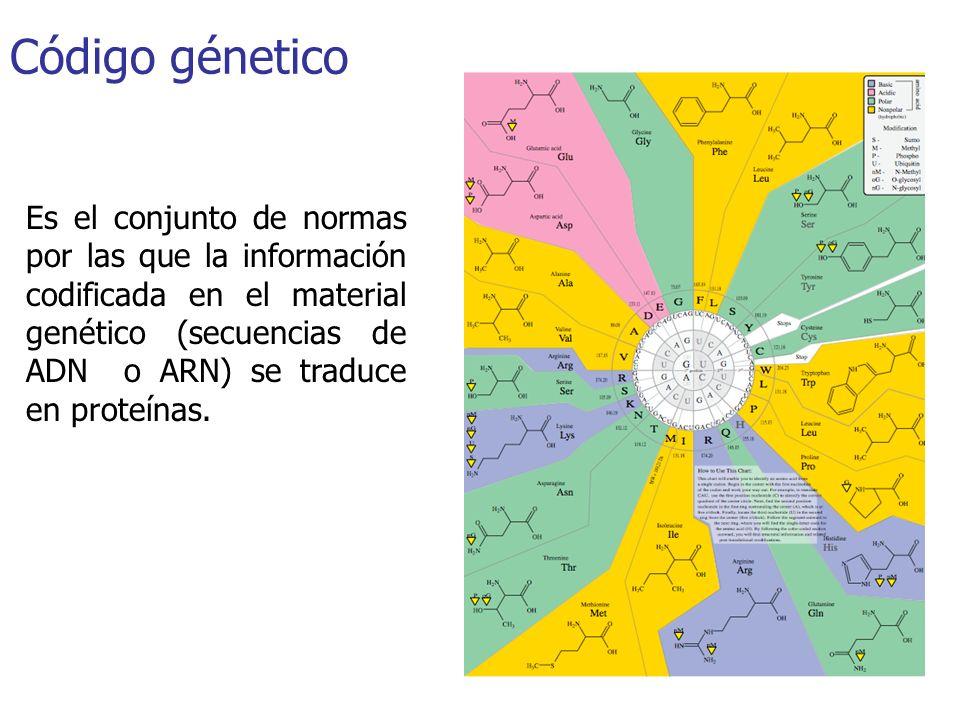 Código génetico Es el conjunto de normas por las que la información codificada en el material genético (secuencias de ADN o ARN) se traduce en proteín