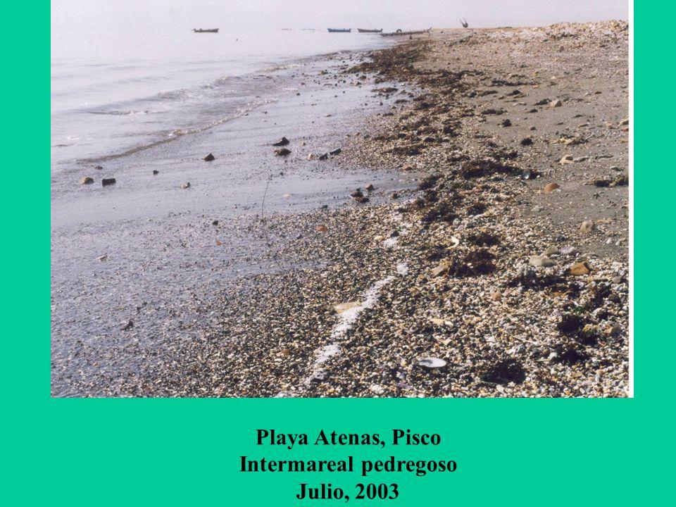 Playa Atenas, Pisco Intermareal pedregoso Julio, 2003