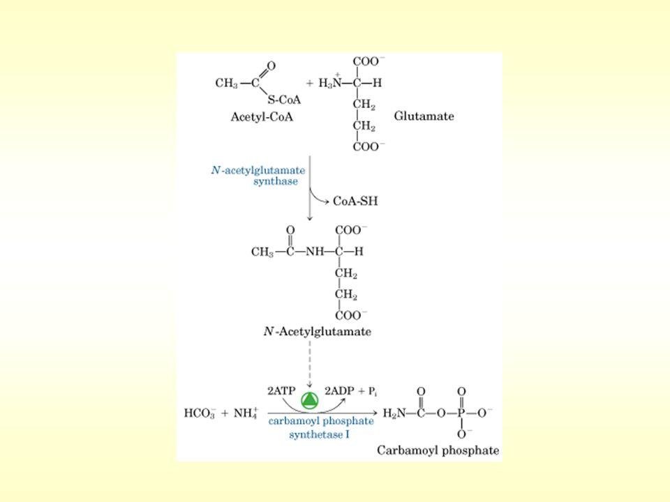 REGULACION DEL CICLO DE LA UREA Regulación a corto plazo Regulación a largo plazo Carbamil fosfato sintetasa I (+) N-Acetil glutamato Biosíntesis de las enzimas del ciclo (+) Aumento proteínas de la dieta (+) Aumento degradación proteínas endógenas (Inanición ) Química Biológica METABOLISMO DE AMINOACIDOS