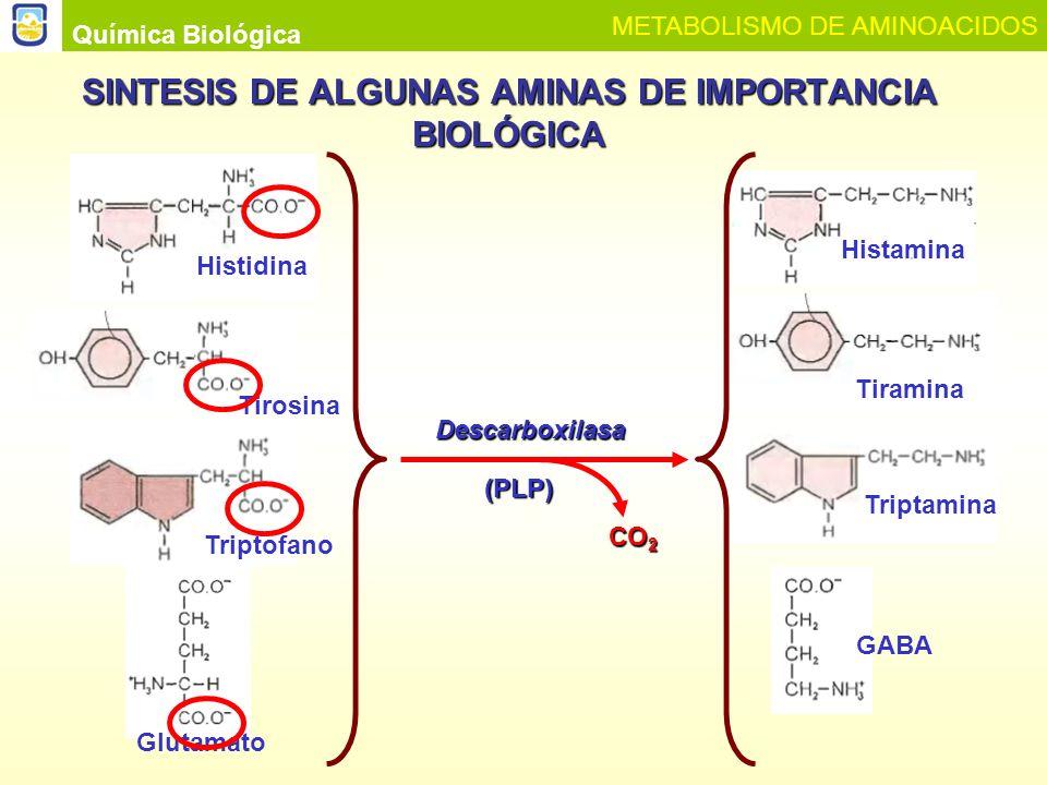 SINTESIS DE ALGUNAS AMINAS DE IMPORTANCIA BIOLÓGICA Química Biológica METABOLISMO DE AMINOACIDOS