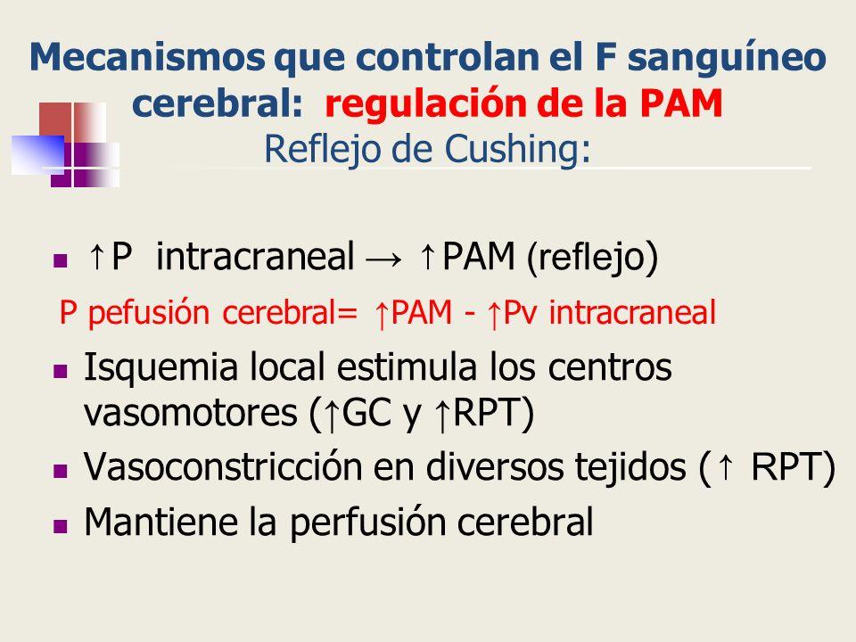 Mecanismos que controlan el F sanguíneo cerebral: regulación de la PAM Reflejo de Cushing: P intracraneal PAM (refle jo) Isquemia local estimula los c
