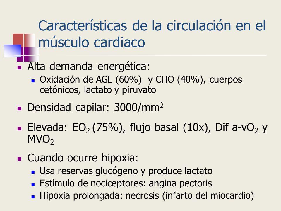 Características de la circulación en el músculo cardiaco Alta demanda energética: Oxidación de AGL (60%) y CHO (40%), cuerpos cetónicos, lactato y pir