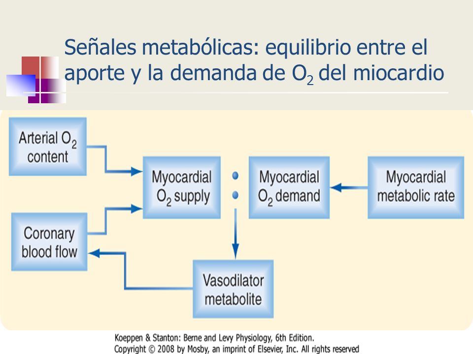 Señales metabólicas: equilibrio entre el aporte y la demanda de O 2 del miocardio