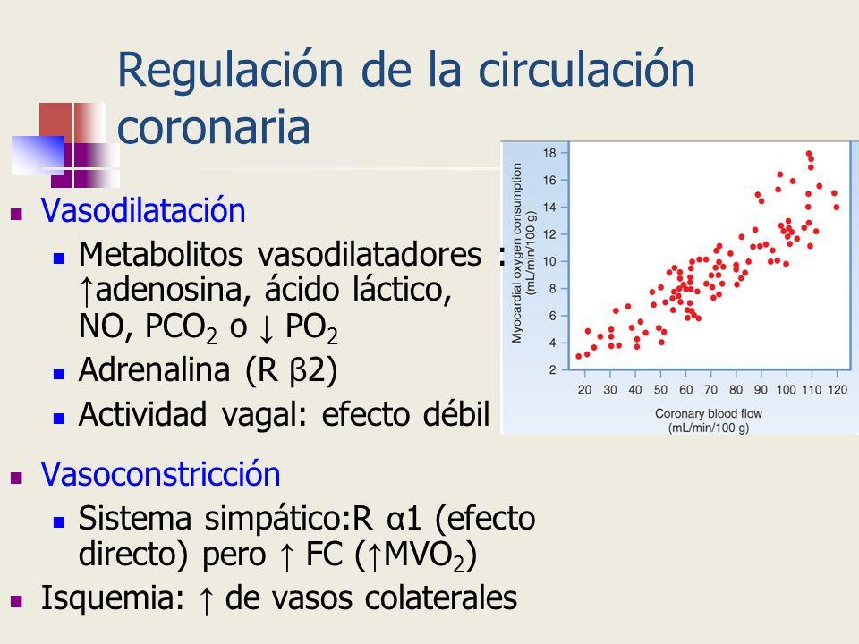 Regulación de la circulación coronaria Vasodilatación Metabolitos vasodilatadores : adenosina, ácido láctico, NO, PCO 2 o PO 2 Adrenalina (R β 2) Acti