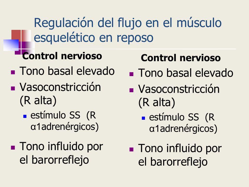 Regulación del flujo en el músculo esquelético en reposo Control nervioso Tono basal elevado Vasoconstricción (R alta) estímulo SS (R α1 adrenérgicos)
