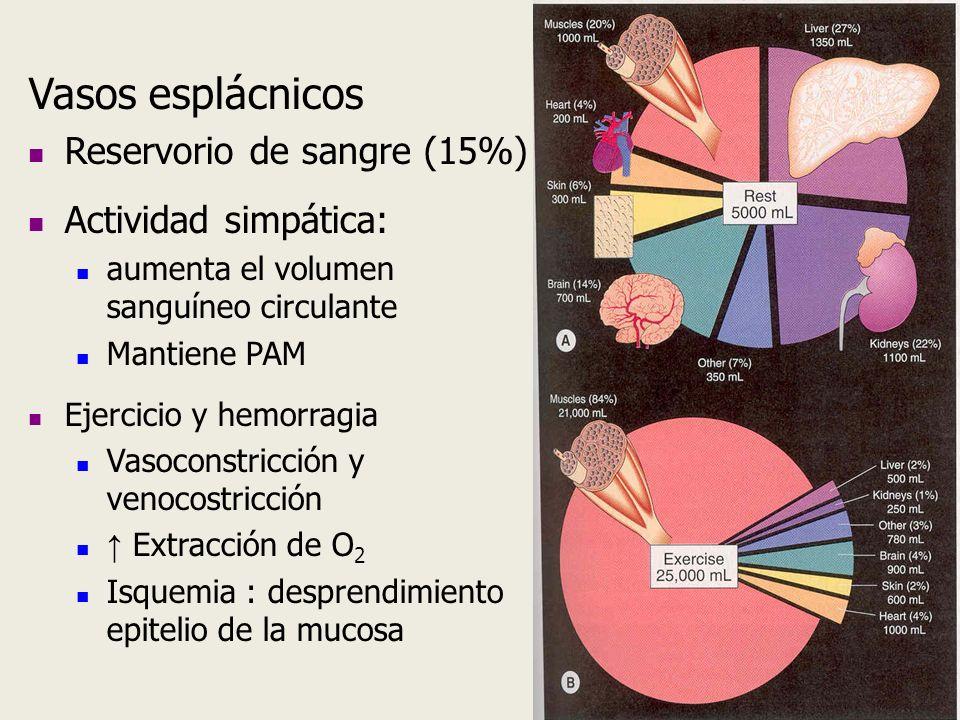 Vasos esplácnicos Reservorio de sangre (15%) Actividad simpática: aumenta el volumen sanguíneo circulante Mantiene PAM Ejercicio y hemorragia Vasocons