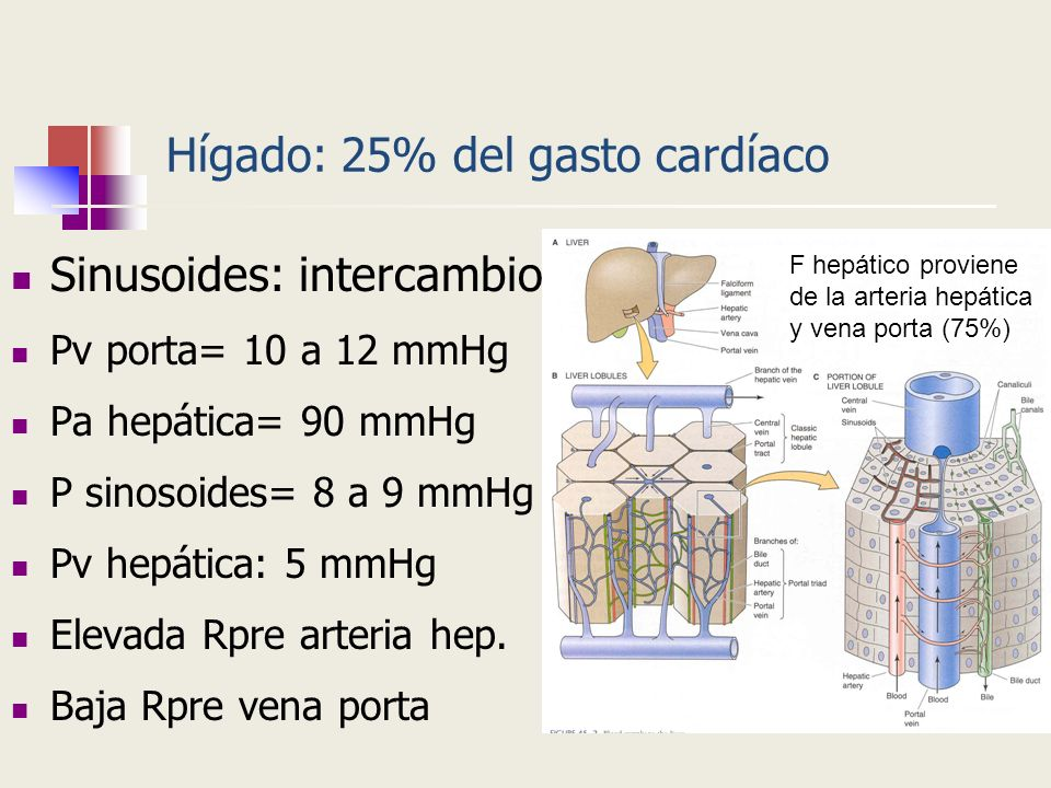 Hígado: 25% del gasto cardíaco Sinusoides: intercambio Pv porta= 10 a 12 mmHg Pa hepática= 90 mmHg P sinosoides= 8 a 9 mmHg Pv hepática: 5 mmHg Elevad