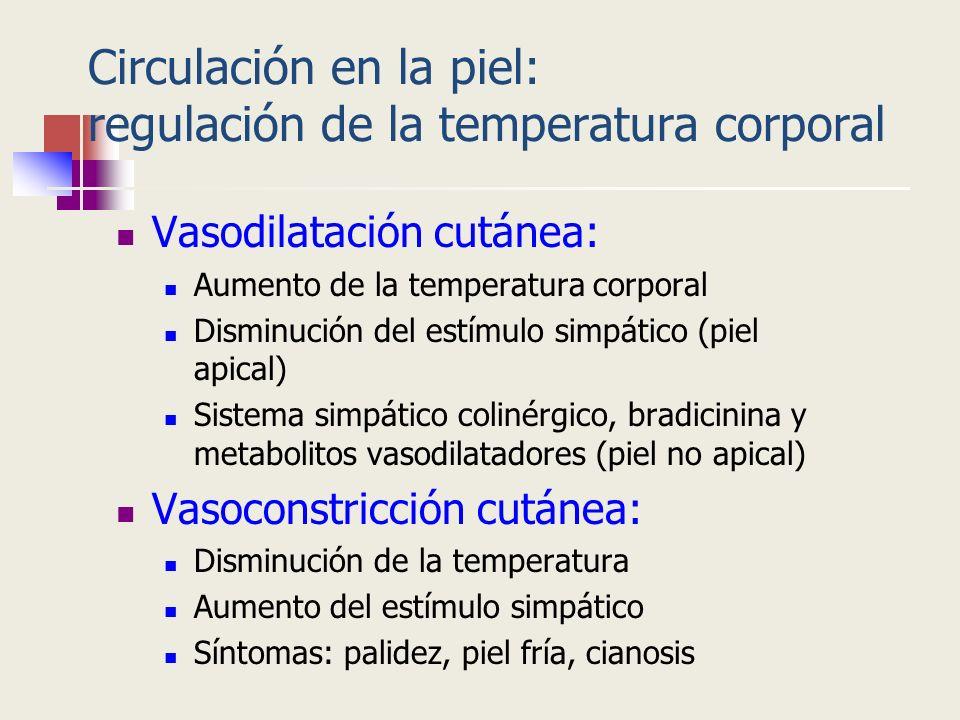 Circulación en la piel: regulación de la temperatura corporal Vasodilatación cutánea: Aumento de la temperatura corporal Disminución del estímulo simp
