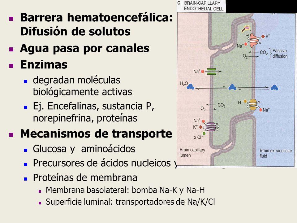 Barrera hematoencefálica: Difusión de solutos Agua pasa por canales Enzimas degradan moléculas biológicamente activas Ej. Encefalinas, sustancia P, no