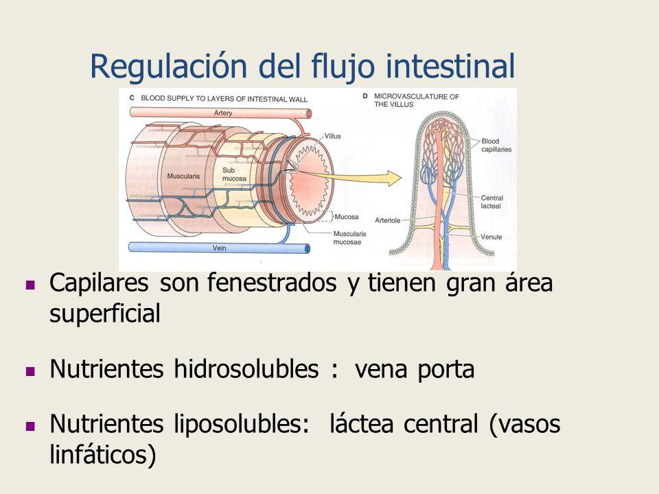 Capilares son fenestrados y tienen gran área superficial Nutrientes hidrosolubles : vena porta Nutrientes liposolubles: láctea central (vasos linfátic