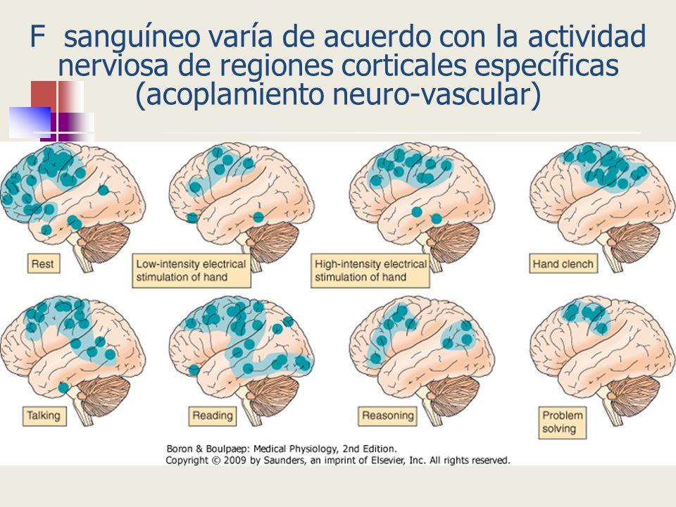 Mecanismos controlan el F sanguíneo cerebral Vasoconstricción Sistema simpático Vasodilatación Sistema parasimpático Neurotransmisores vasodilatadores en terminaciones sensoriales Sustancia P y péptido relacionado con el gen de la calcitonina P transmural de los vasos sanguíneos cerebrales, produce radio y vasoconstricción Control nervioso: débil Control miogénico