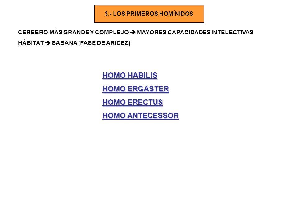 3.- LOS PRIMEROS HOMÍNIDOS CEREBRO MÁS GRANDE Y COMPLEJO MAYORES CAPACIDADES INTELECTIVAS HÁBITAT SABANA (FASE DE ARIDEZ) HOMO HABILIS HOMO ERGASTER H