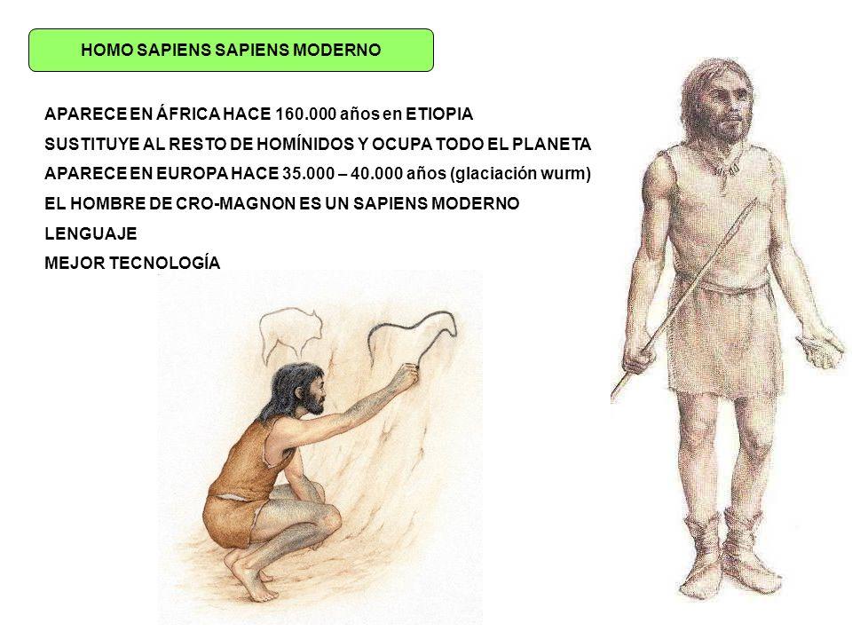 HOMO SAPIENS SAPIENS MODERNO APARECE EN ÁFRICA HACE 160.000 años en ETIOPIA SUSTITUYE AL RESTO DE HOMÍNIDOS Y OCUPA TODO EL PLANETA APARECE EN EUROPA