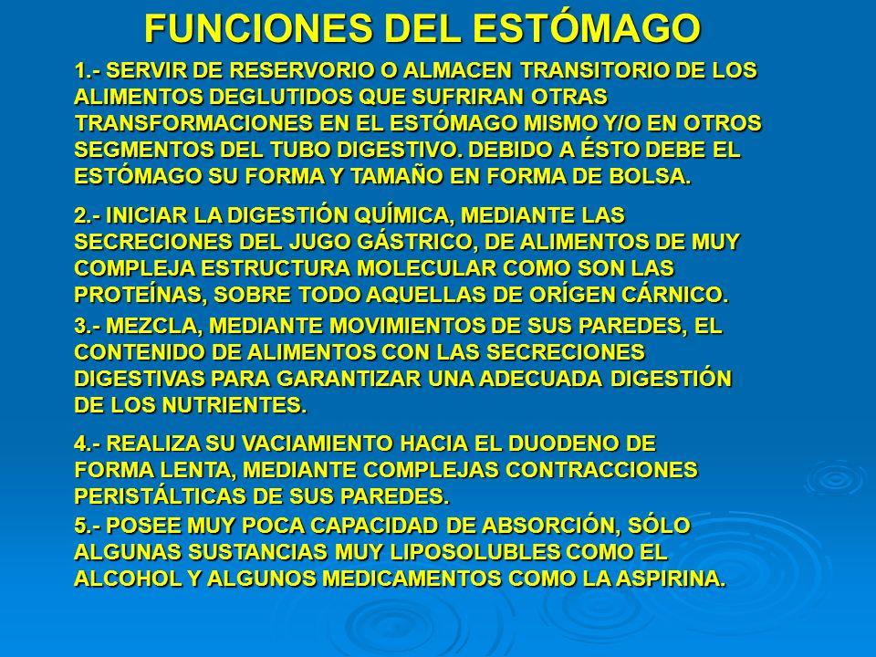 FUNCIONES DEL ESTÓMAGO 1.- SERVIR DE RESERVORIO O ALMACEN TRANSITORIO DE LOS ALIMENTOS DEGLUTIDOS QUE SUFRIRAN OTRAS TRANSFORMACIONES EN EL ESTÓMAGO M