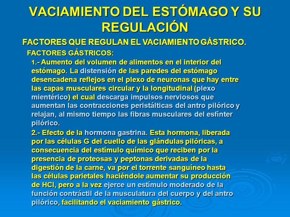 VACIAMIENTO DEL ESTÓMAGO Y SU REGULACIÓN FACTORES QUE REGULAN EL VACIAMIENTO GÁSTRICO. FACTORES GÁSTRICOS: 1.- Aumento del volumen de alimentos en el