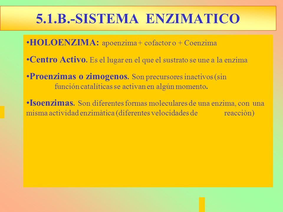 HOLOENZIMA: apoenzima + cofactor o + Coenzima Centro Activo. Es el lugar en el que el sustrato se une a la enzima Proenzimas o zimogenos. Son precurso