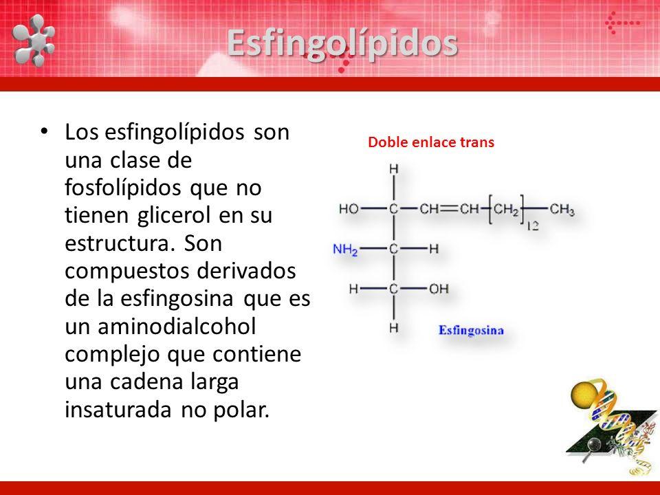Esfingolípidos Los esfingolípidos son una clase de fosfolípidos que no tienen glicerol en su estructura. Son compuestos derivados de la esfingosina qu