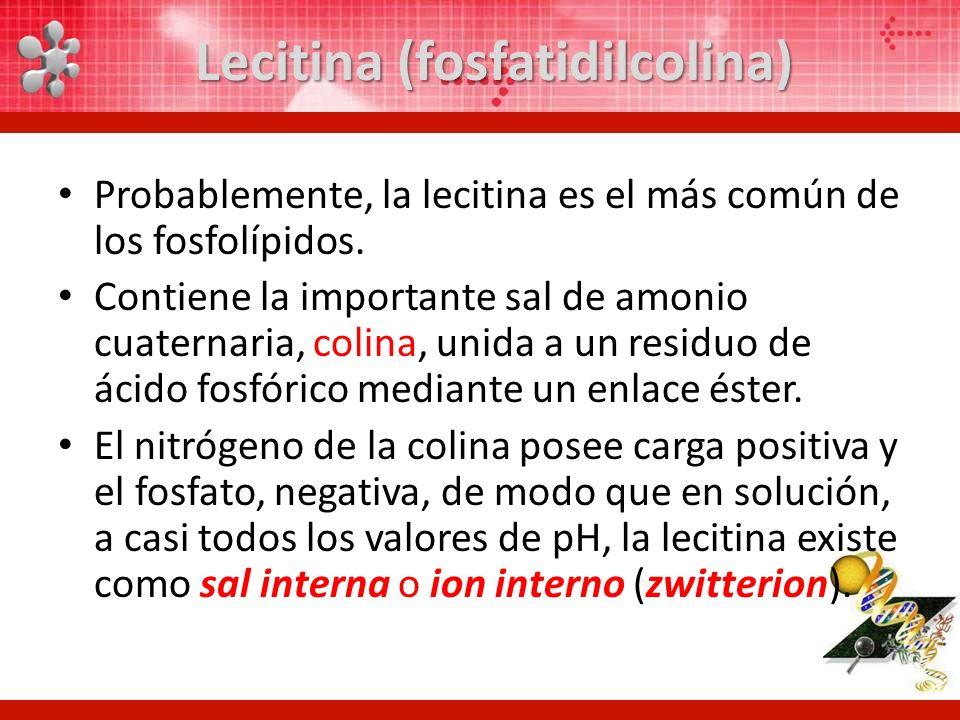 Lecitina (fosfatidilcolina) Probablemente, la lecitina es el más común de los fosfolípidos. Contiene la importante sal de amonio cuaternaria, colina,