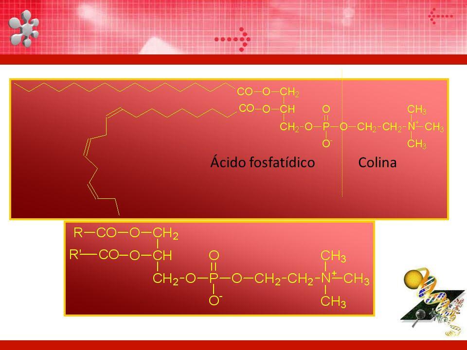 Esfingomielina El esfingolípido más abundante es la esfingomielina, la cual contiene un enlace amídico con el átomo de nitrógeno de la esfingosina y un grupo fosfato unido a un grupo colina localizado en el átomo de carbono terminal.