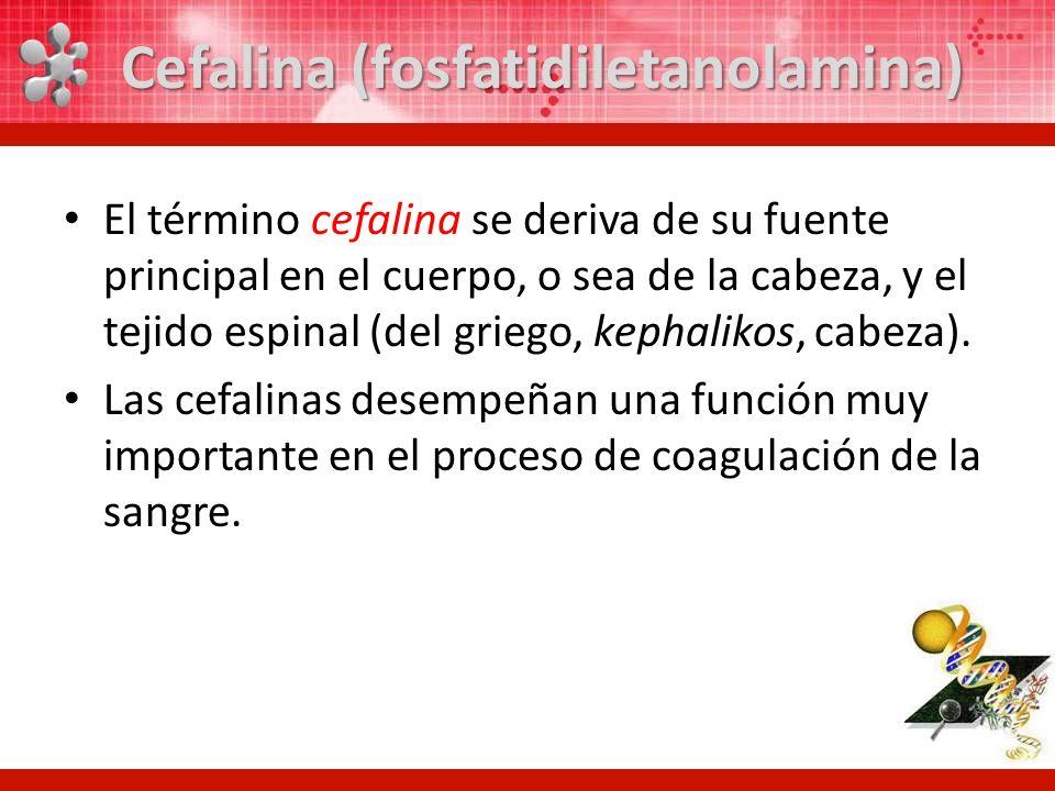 El término cefalina se deriva de su fuente principal en el cuerpo, o sea de la cabeza, y el tejido espinal (del griego, kephalikos, cabeza). Las cefal