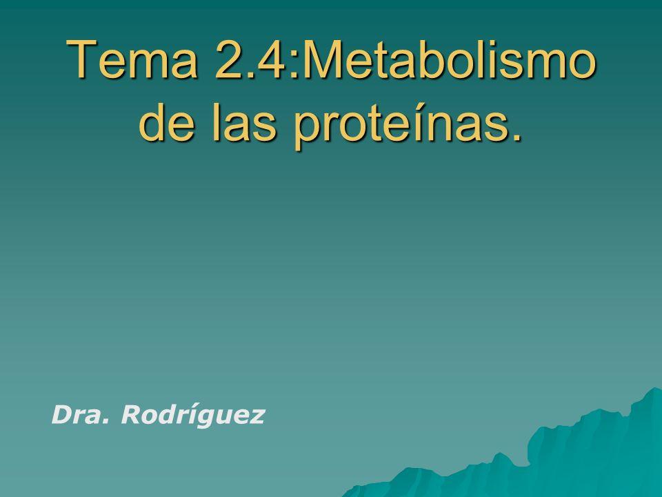 Tema 2.4:Metabolismo de las proteínas. Dra. Rodríguez
