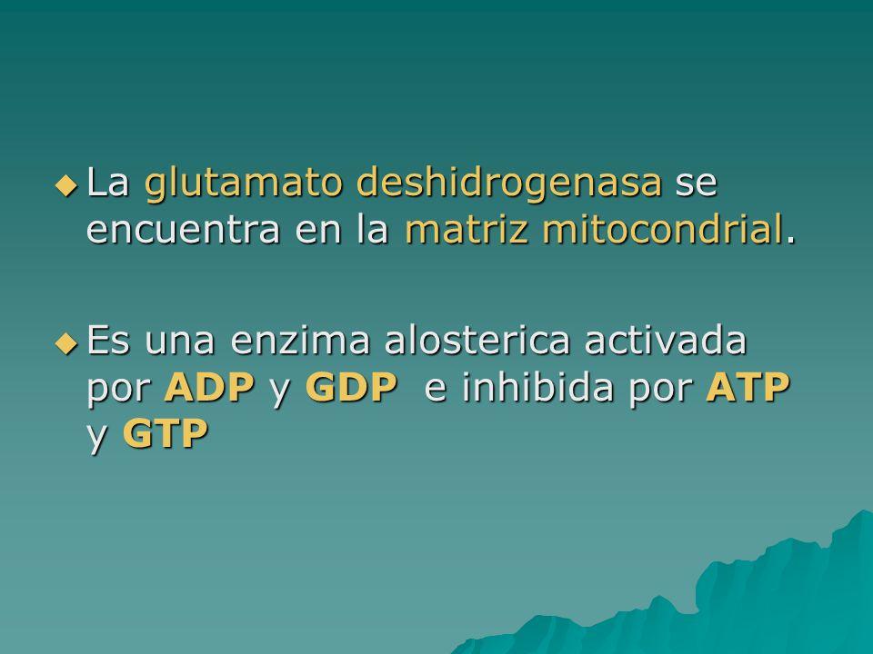 La glutamato deshidrogenasa se encuentra en la matriz mitocondrial. La glutamato deshidrogenasa se encuentra en la matriz mitocondrial. Es una enzima