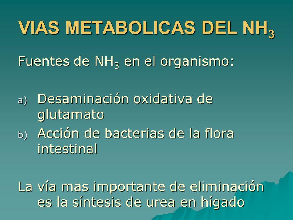 VIAS METABOLICAS DEL NH 3 Fuentes de NH 3 en el organismo: a) Desaminación oxidativa de glutamato b) Acción de bacterias de la flora intestinal La vía